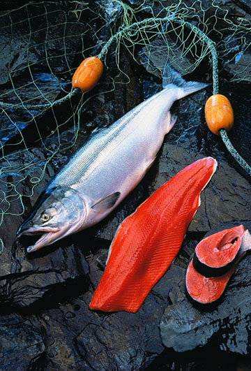 Fresh Sockeye Salmon Displayed on Rocks with a Filet and Steaks